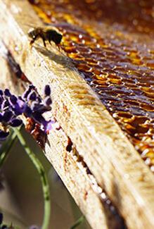 Les abeilles, maillon essentiel de la biodiversité