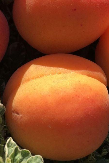 Abricot, Ingrédient