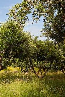 Vers une agriculture durable et locale