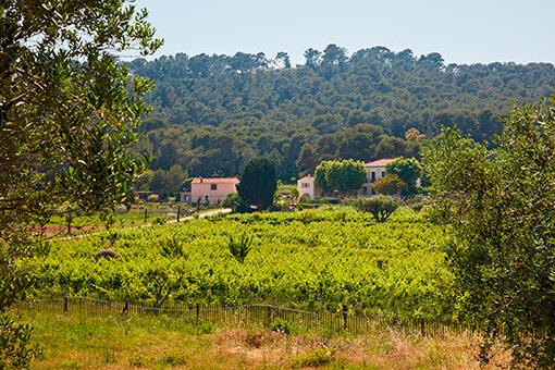 Préserver la biodiversité de Provence