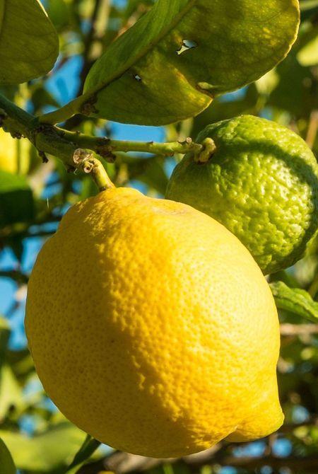 Citron, Ingrédient