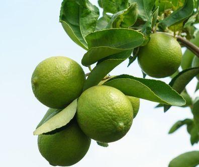 Citron vert, Ingrédient