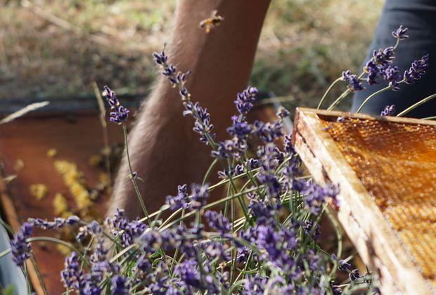 Le Petit Marseillais, des produits respectueux de nature