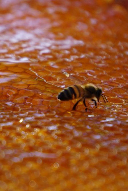 Miel de Haut Provence, Ingrédient